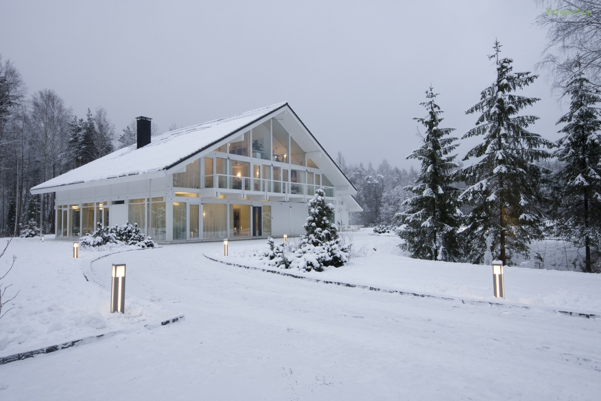 Хвойные растения – зимний ландшафт